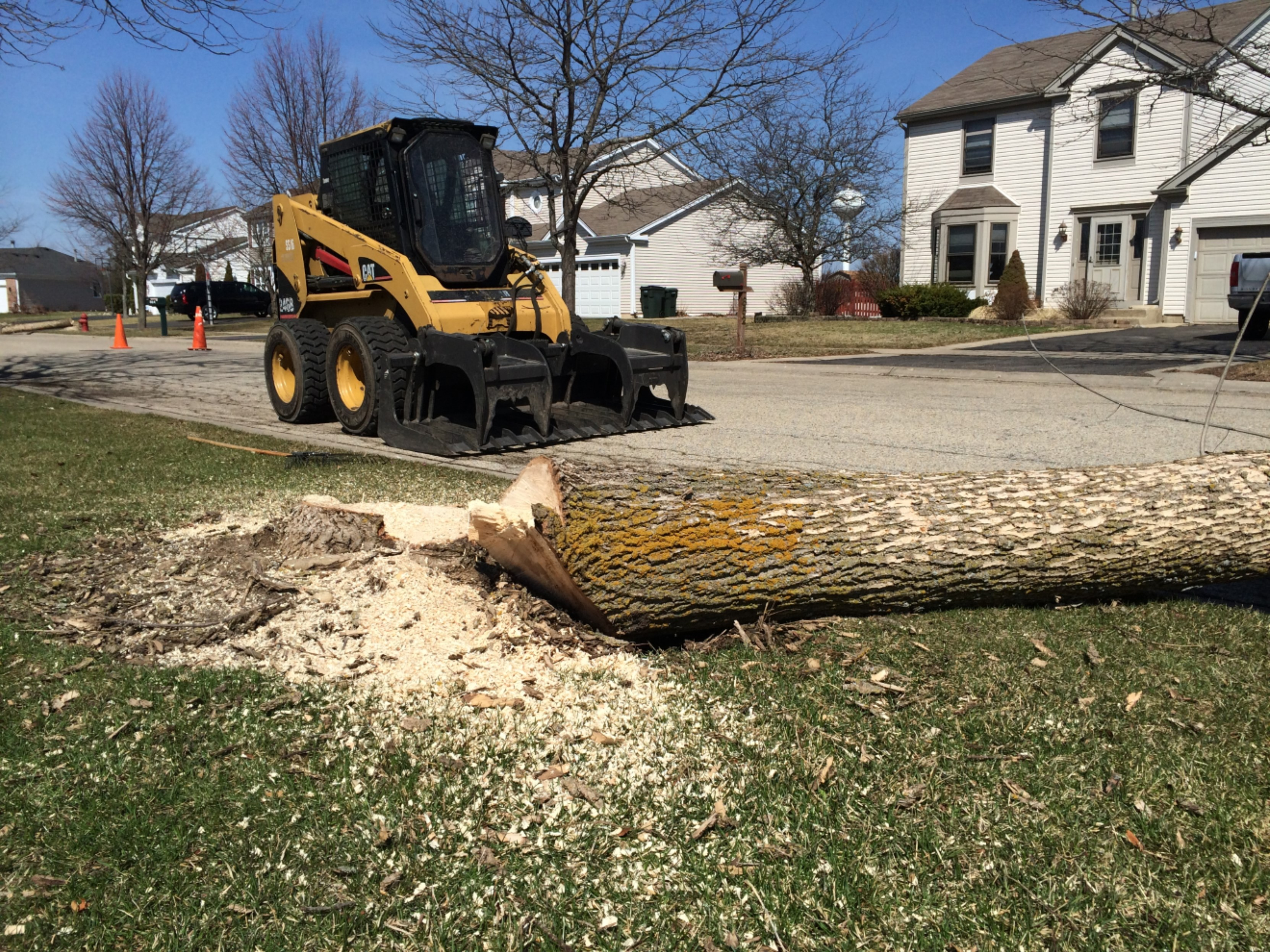 PARKWAY TREE REMOVAL